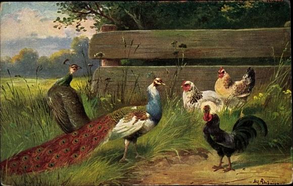 Künstler Ak Schönian, Alfred, Pfauen und Hühner auf einer Wiese