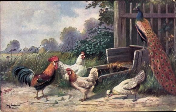 Künstler Ak Schönian, Alfred, Pfau, Hahn und Hühner