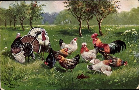 Künstler Ak Schönian, Alfred, Truthähne, Hühner und Hahn auf einer Wiese