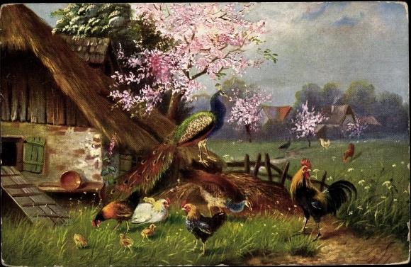 Künstler Ak Pfau auf einem Misthaufen, Hahn, Hühner vor einem Stall