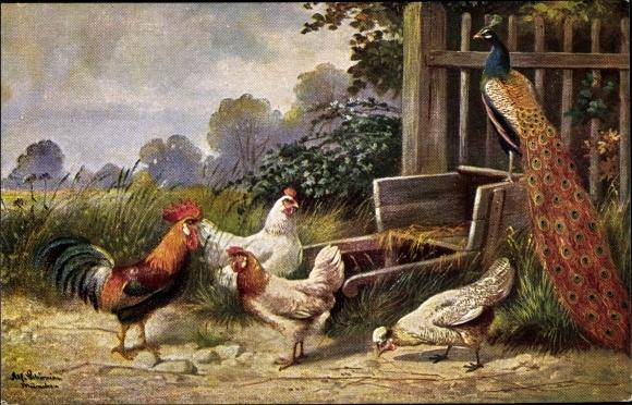 Künstler Ak Schönian, Alfred, Pfau auf einem Handkarren, Hahn und Hühner