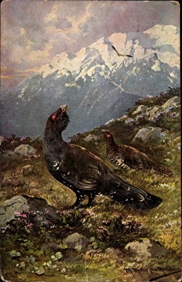 Künstler Ak Müller, M. jun., Rufender Auerhahn und Weibchen im Gebirge