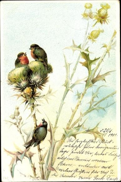 Litho Drei kleine Vögel mit rotem Hals auf einer Distel