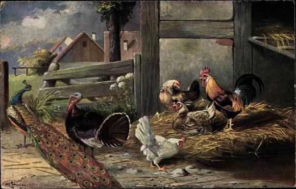 Künstler Ak Schönian, Alfred, Pfau, Truthahn, Hahn und Hühner