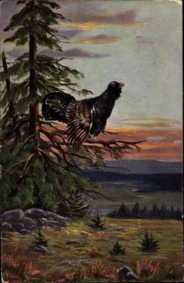 Künstler Ak Stahl, Auerhahn auf einem Ast sitzend, Landschaftsansicht