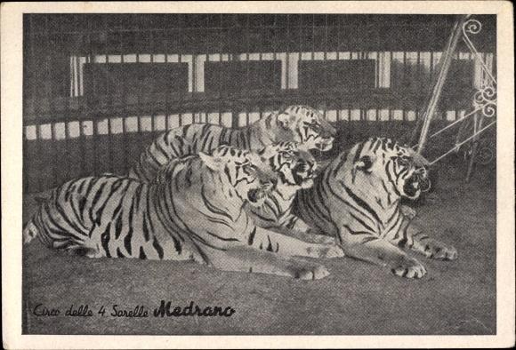 Ak Zirkus, Circo delle 4 Sorelle, Medrano, Tiger