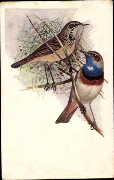 Künstler Ak Männliches und weibliches Blaukehlchen auf einem Zweig