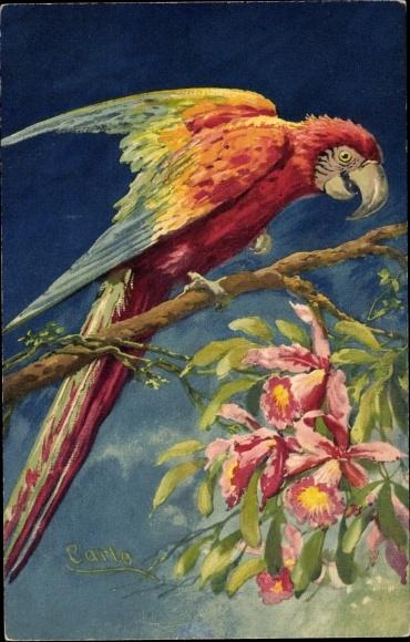 Künstler Ak Carlo, Roter Papagei auf einem Ast, Orchideenblüten