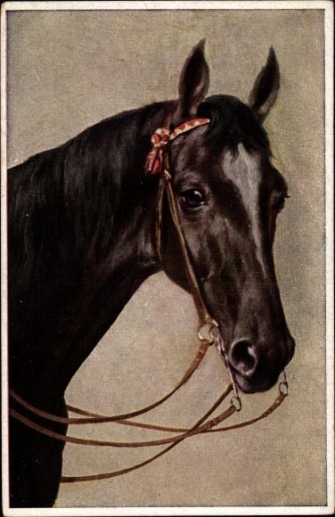 Künstler Ak Rassepferd, Portrait von einem Pferd mit Zaumzeug