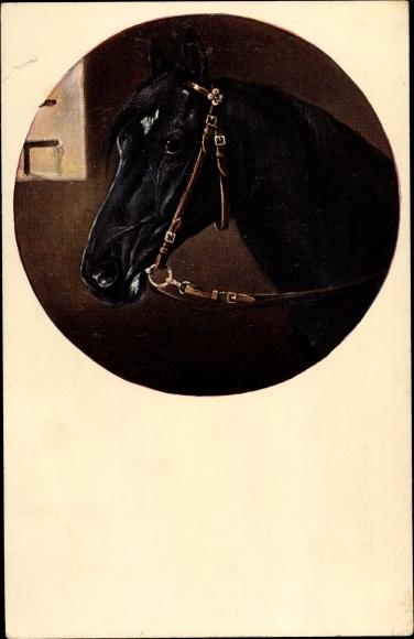 Künstler Ak Portrait von einem schwarzen Pferd mit Zaumzeug