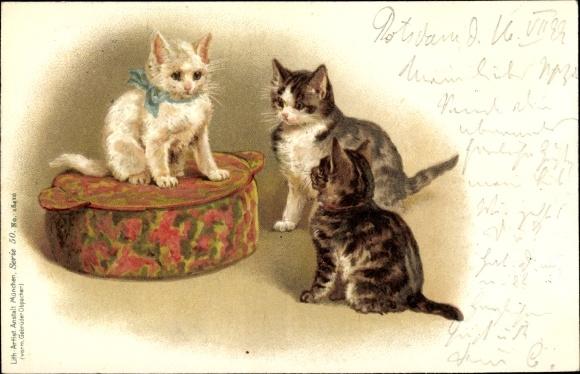 Litho Weiße Katze mit blauer Schleife auf einem Kissen, zwei getigerte Katzen
