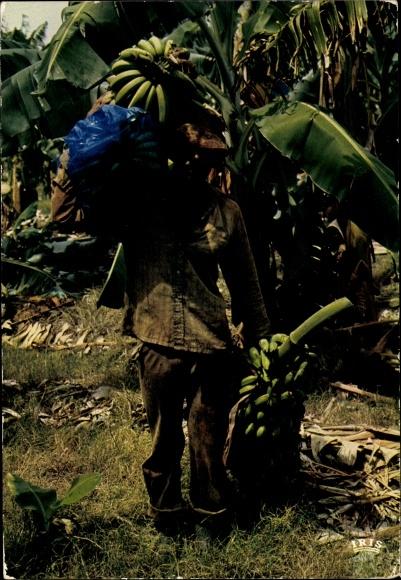 Ak Martinique, Récolte des Bananes