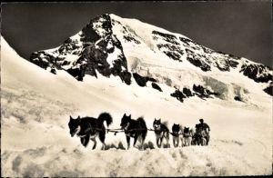 Ak Jungfraujoch, Polarhunde mit Mönch, Schlittenhunde, Berg