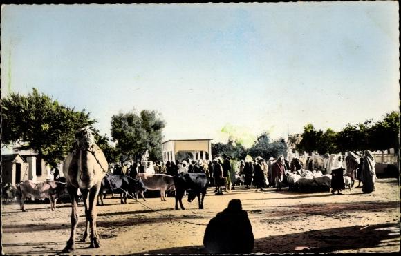 Ak Djerba Midoun Tunesien, Le Marché aux bestiaux d'Houmt Souk, Kamel