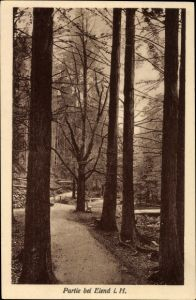 Ak Elend Oberharz am Brocken, Partie im Harz