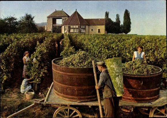 Ak Schweigen an der Weinstraße, Das deutsche Weintor, Weinlese, Ernte