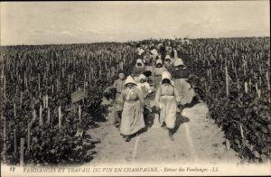 Ak Vendanges et Travail du Vin en Champagne, Retour des Vendanges