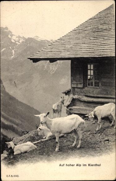 Ak Schweiz, Auf hoher Alp im Kienthal, Ziegen, Almhütte