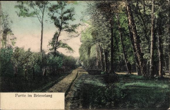 Ak Brieselang im Havelland, Waldweg, Restaurant Waldheim