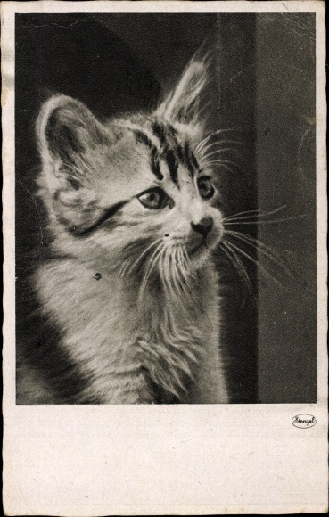 Künstler Ak Junge Katze, Kätzchen
