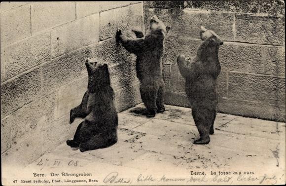 Ak Bern Stadt Schweiz, Bären im Bärengraben, la fosse aux ours