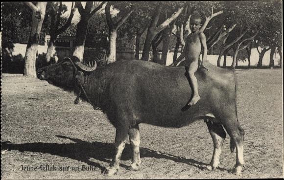Ak Jeune fellak sur un Bufle, Büffel