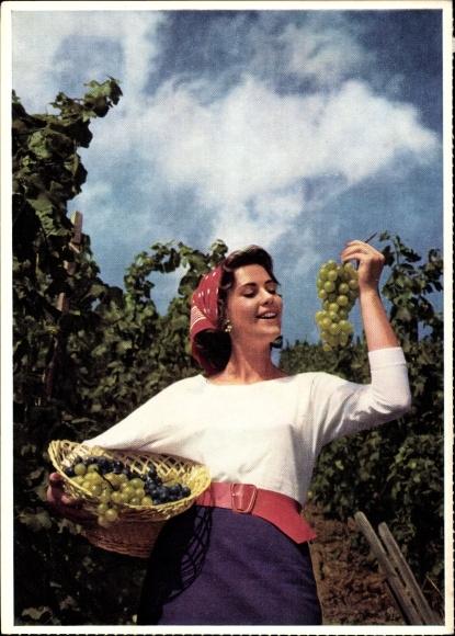 Ak Weinanbau, Weinleserin, Weintrauben