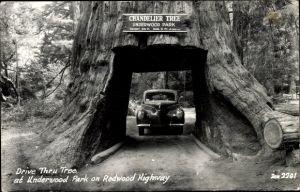 Ak Leggett Kalifornien USA, Drive Thru Tree, Chandelier Tree, Underwood Park, Redwood Highway