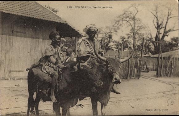 Ak Senegal, Boeufs porteurs, Senegalesen reiten auf Rindern
