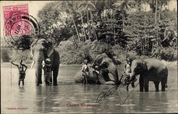Ak Ceylon Sri Lanka, Elefanten, Mahuts