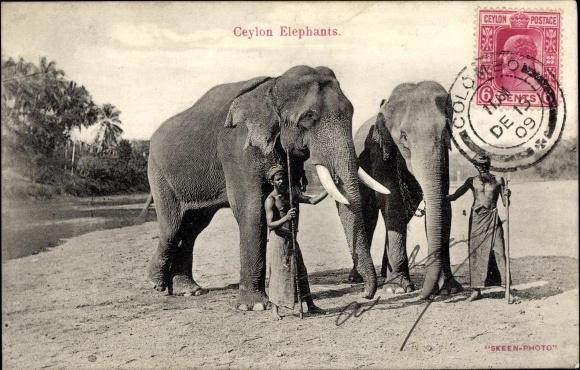 Ak Ceylon Sri Lanka, Elefanten, Mahuts 0