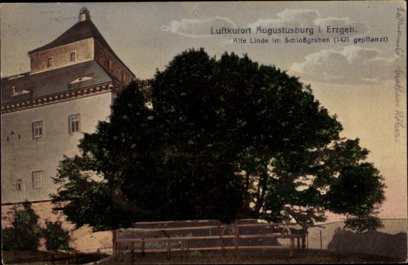 Ak Augustusburg im Erzgebirge, Alte Linde v. 1421 im Schlossgraben 0