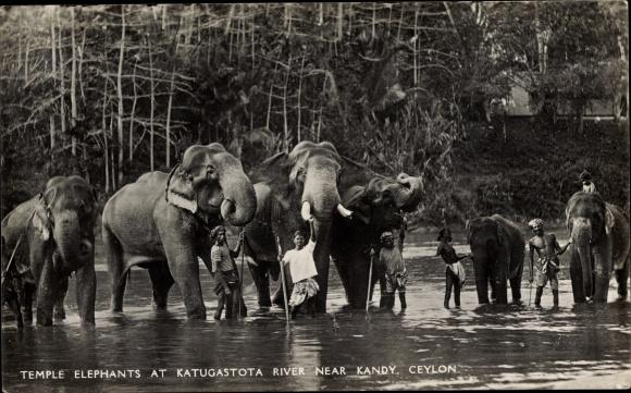 Ak Kandy Ceylon Sri Lanka, Temple elefants, Katugastota River