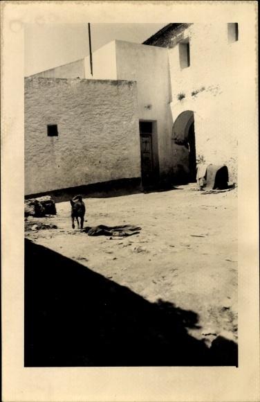 Foto Ak Aïd el-Kebir Marokko, Straßenpartie, Haus, Hund