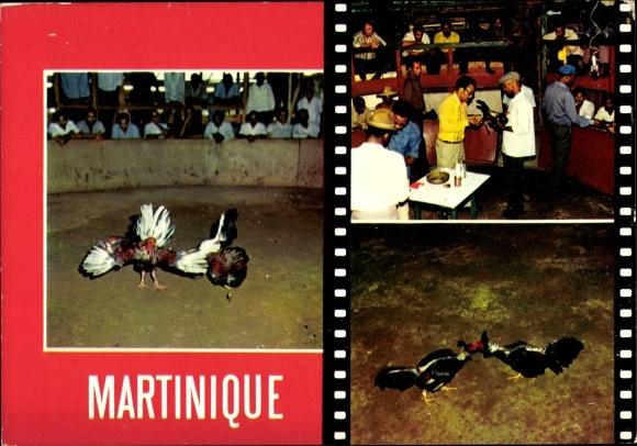 Ak Rivière-Pilote Martinique, Pitt Cléry, Combat de coqs, spectateurs