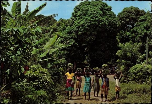 Ak Martinique, Île, marchandes indigènes de Bananes, voie, arbres 0