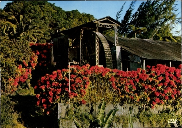 Ak Saint Pierre Martinique, vieux moulin vers le village, vue extérieure, fleurs 0