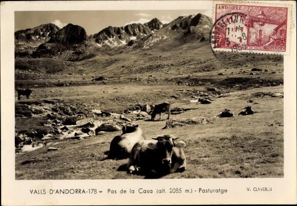 Ak Andorra, Pas de la Casa, Pasturatge, Kühe