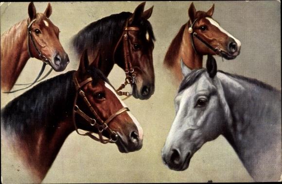 Künstler Ak Pferde, Kopfstudien