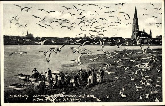 Ak Schleswig an der Schlei, Uferpartie am Mövenberg, Sammeln der Möveneier, Stadtansicht, Dom
