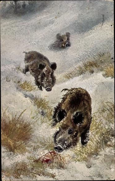 Künstler Ak Wildschweine bei der Nahrungssuche im Wald