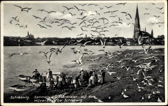 Ak Schleswig an der Schlei, Sammeln der Möweneier auf dem Möwenberg