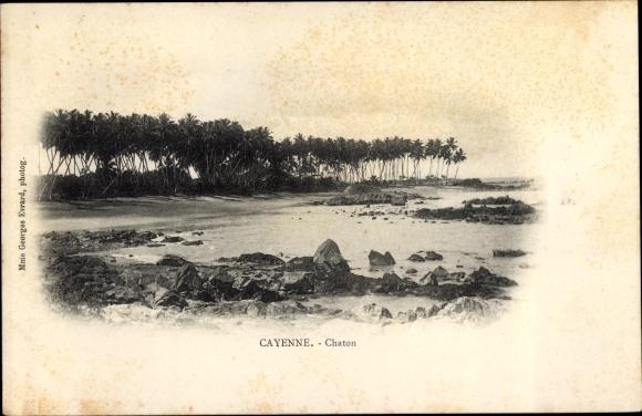Ak Cayenne Französisch Guayana, Chaton