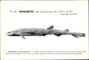 Ak Roussette, dite Saumonasse, Scyliorhinus canicula, Katzenhai