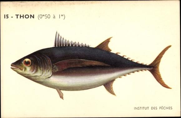 Künstler Ak Institut des Peches, Thon, Thunfisch