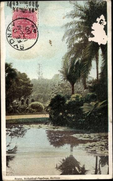 Ak Sydney Australien, Botanical Gardens, Palmen