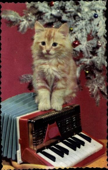 Ak Kleines Kätzchen auf einem Akkordeon, Weihnachtsbaum