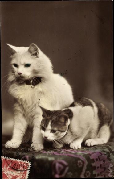 Ak Zwei Hauskatzen beobachten etwas vom Tisch aus