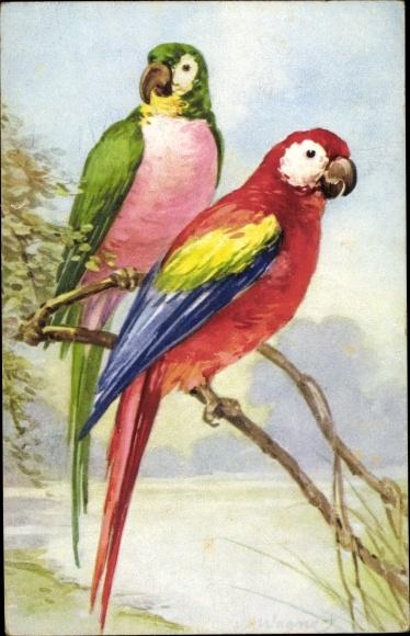 Künstler Ak Zwei Papageien auf einem Ast sitzend