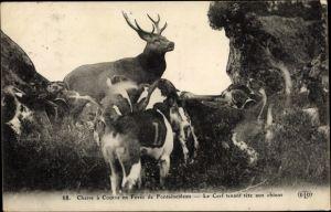 Ak Chasse à courre en Foret de Fontainebleau, Le Cerf tenant tete aux chiens, Hetzjagd